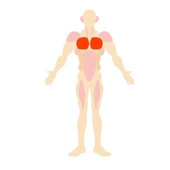 筋トレとささみ,胸筋 マシンの画像